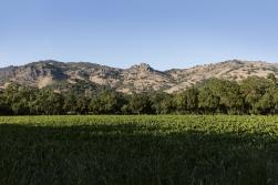 SLWC_Landscapes-11 (1)